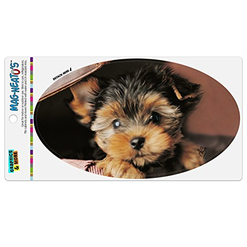 Graphics and More Yorkie Yorkshire Terrier Welpe Hund in Aktentasche Kofferraum Koffer Automotive Car Kühlschrank Locker Vinyl Euro Oval Magnet